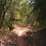 Doi Suthep – Chiang Mai Downhill Mountain Bike Singletrack Trail