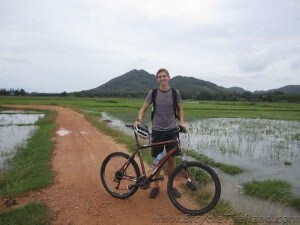 Cycling through tranquil rice plantations