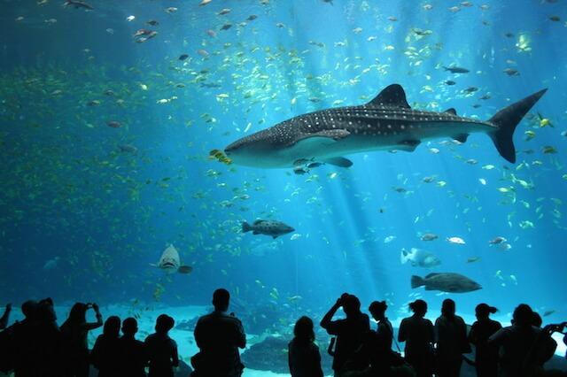 Bungchawak Auquarium whale shark