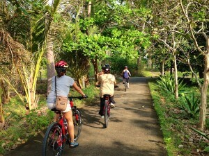 samui-bicycle-tours-12