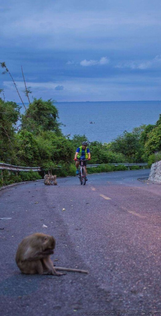 Cyclists and monkeys abound at Khao Sam Muk