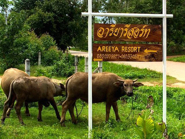 Areeya Resort sign