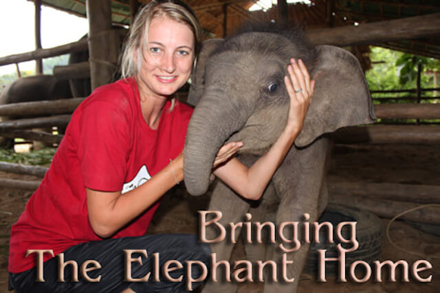 bring-the-elephant-home-pic-1